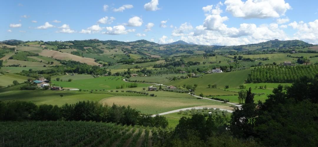 Vineyards Servigliano Italy