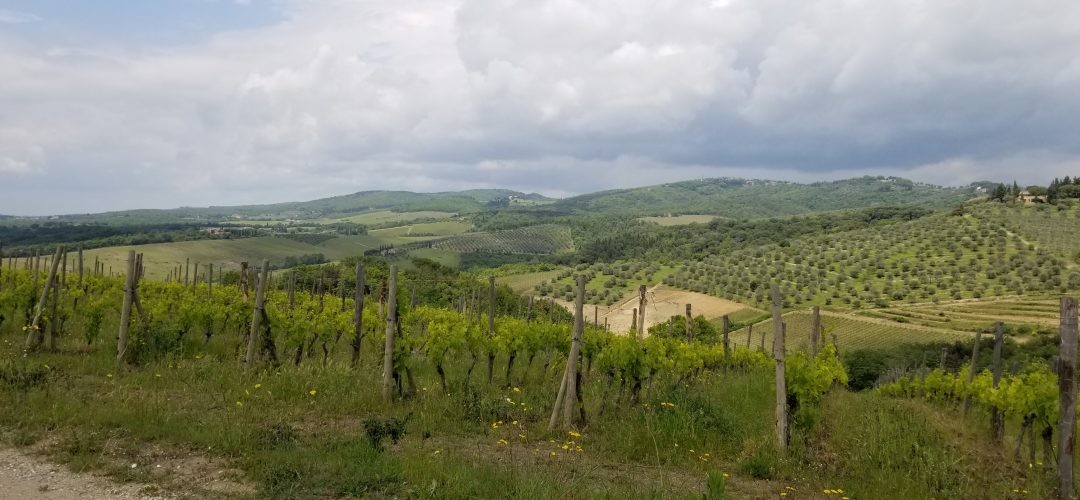 Tuscany vineyards